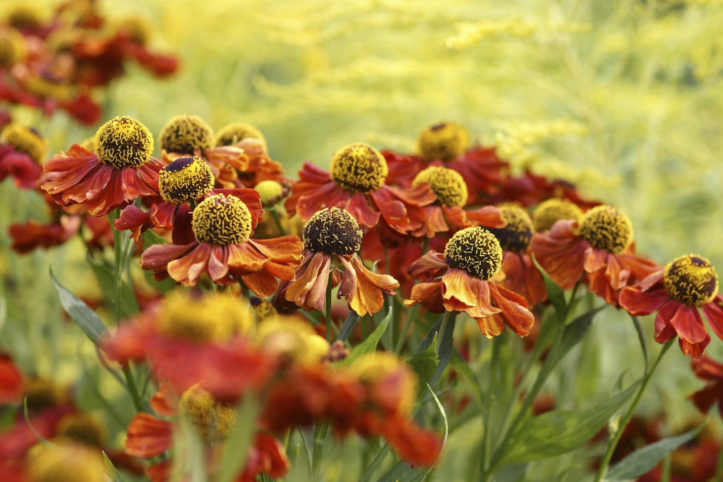 iStock 000014350912Large 1024x682 Fall Flower Decor