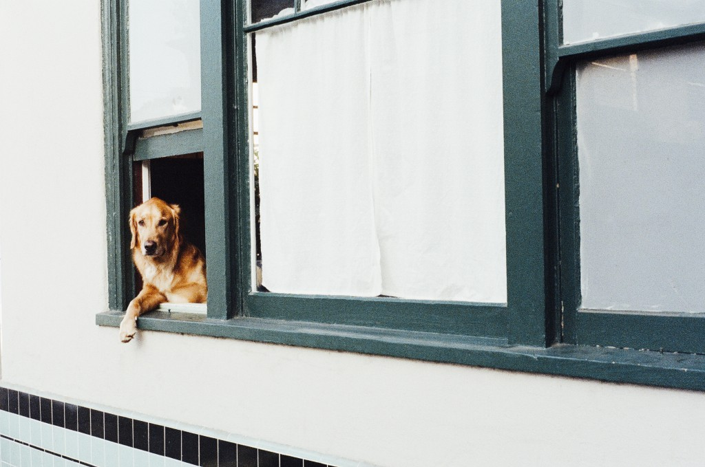 animal dog pet window 1024x679 A Collection of Photo Inspirations