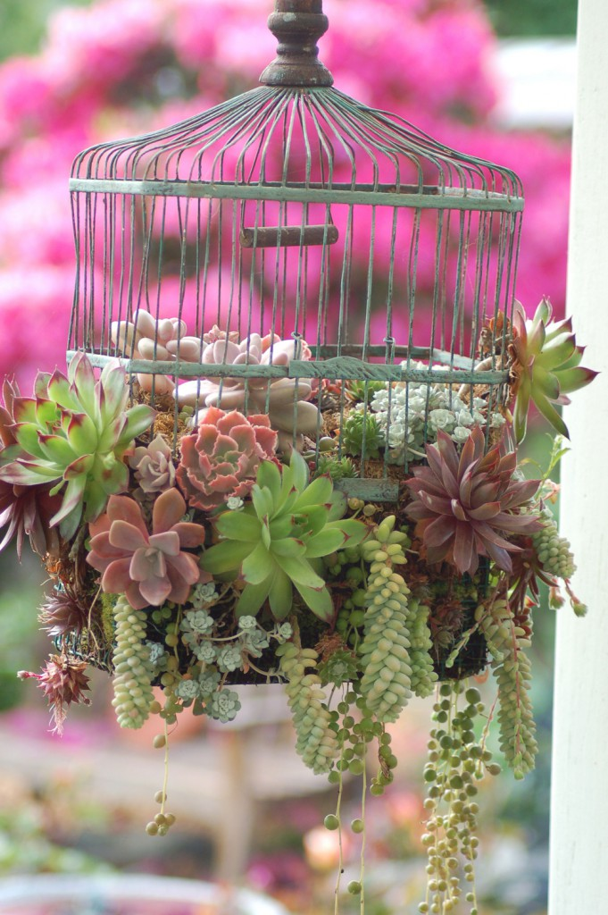 bird cage  681x1024 Brilliant New Ways For Displaying Plants