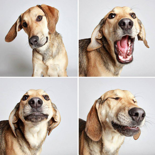 Dog Photo Booth 8 Photo Ideas Every Dog Lover Must Try
