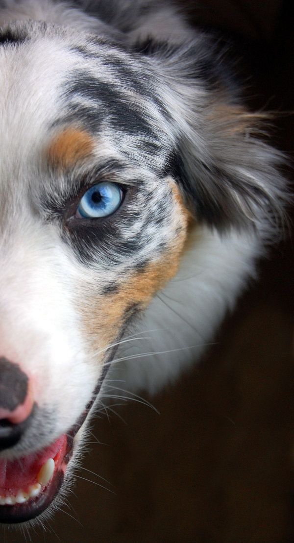 DogCloseUp 8 Photo Ideas Every Dog Lover Must Try