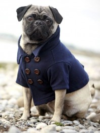 PugClothes 8 Photo Ideas Every Dog Lover Must Try
