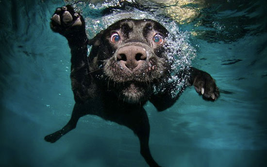 UnderwaterLab 8 Photo Ideas Every Dog Lover Must Try