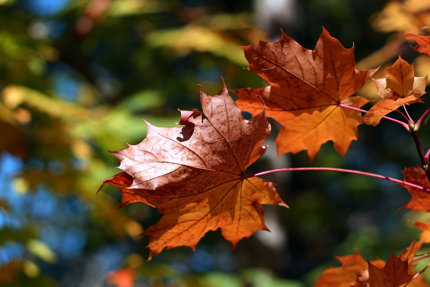 FallLeaves Fall Favorites: Updating Your Home Decor with Autumn Staples