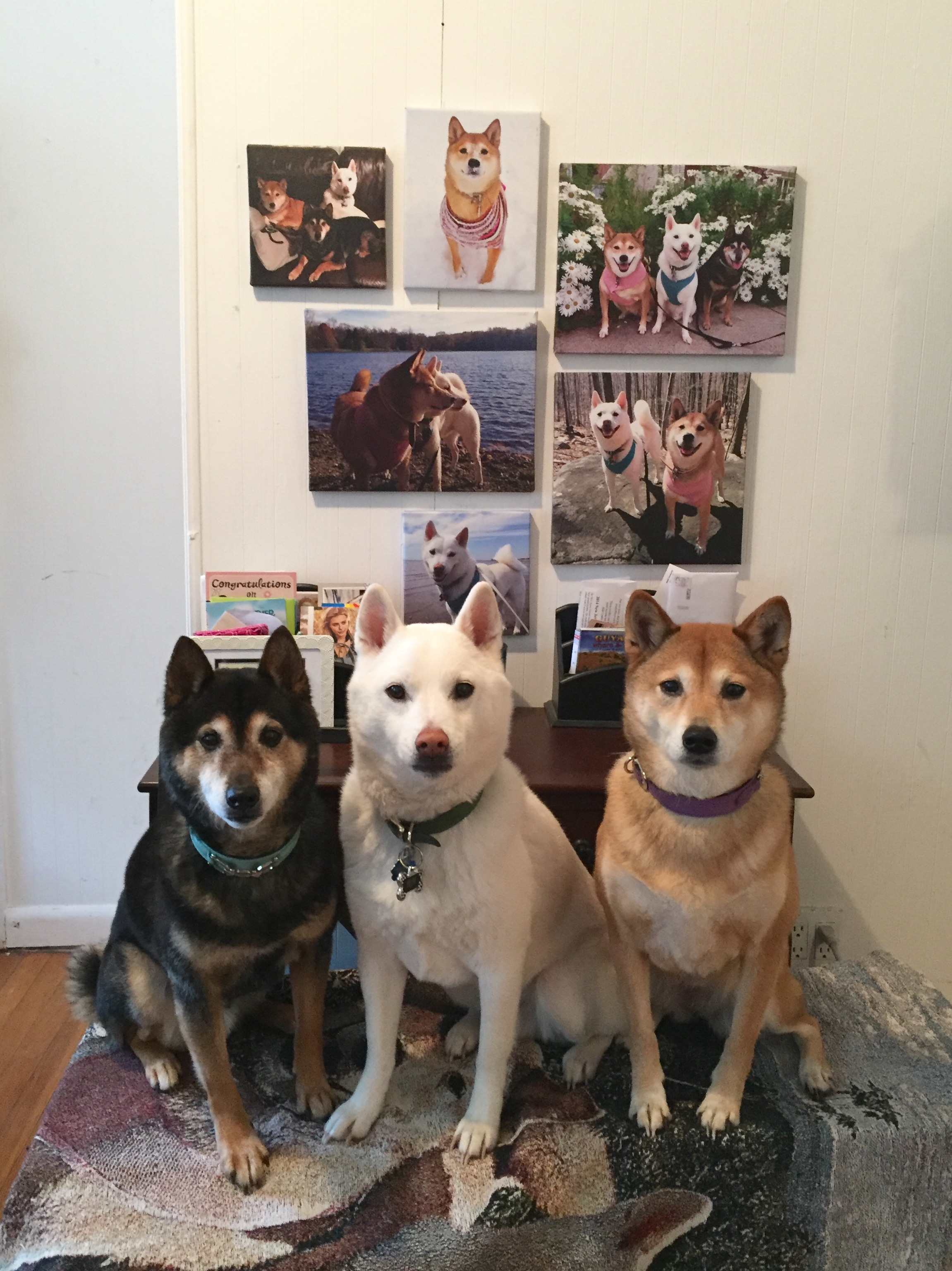 image1 Customer Art Spotlight: Shiba Inu Pet Portraits